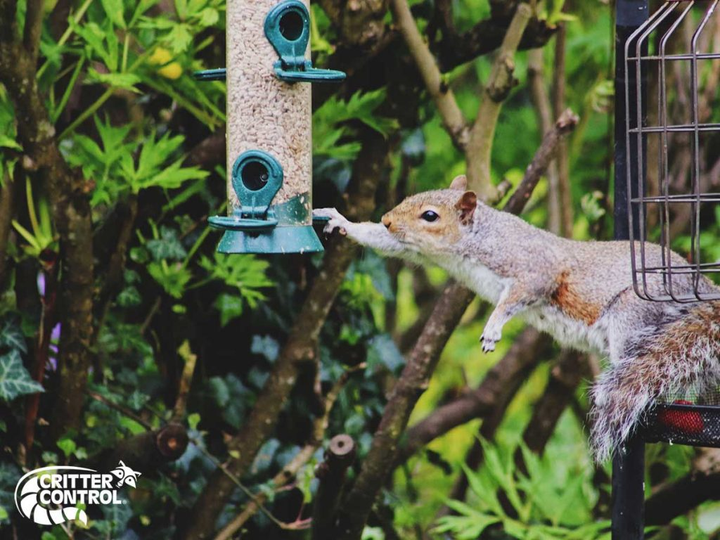 How to Keep Squirrels Out of My Garden 1