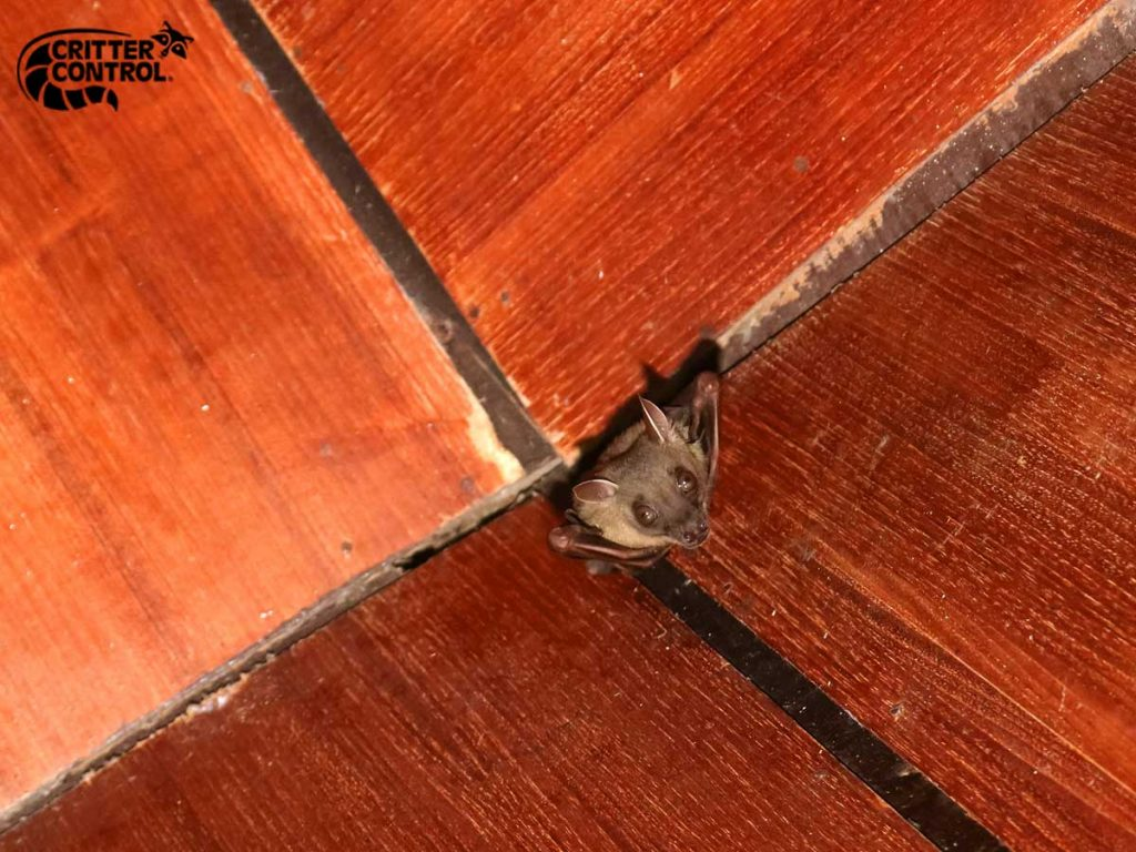 What to Look for in a Bat Control Specialist in Polk County