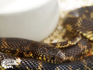 lake wales snake removal