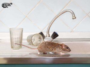 Mice Removal in Polk County