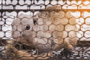 The Problems with DIY Squirrel Trapping