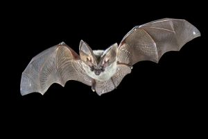 Bat Removal Winter Haven | Trapping | Control | Exterminator