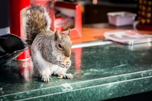 Squirrel standing on marble table