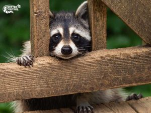 Why You Should Call Your Local Wildlife Removal Experts